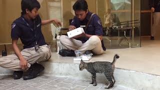 Sule - Kalau Kucing Bisa Ngomong | video Iseng