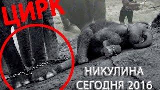 Московский цирк Никулина на Цветном бульваре: фото, видео
