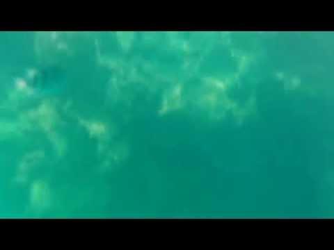 沖縄崎本部ゴリラチョップのリーフエッジでシュノーケリング海中動画220150716