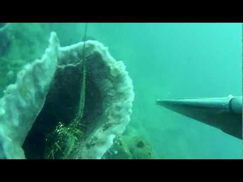 chasse sous marine Martinique 972tz langouste par -14m