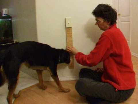 Teach Your Dog to Turn on the Light Switch Part 2 with Clicker Training