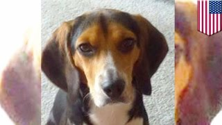 Man Posts Craigslist Ad After Girlfriend Asks Him To Get Rid Of His Adorable Dog - Tomonews