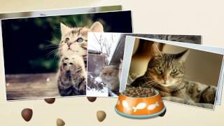 Кошки - слайд шоу с вашим любимым домашним питомцем