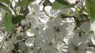 БЕЛЫЕ КРЫЛЬЯ _ ВАЛЕРИЙ ОБОДЗИНСКИЙ(http://youtu.be/tjcPzLh63fo Автор ролика Wlad Belov