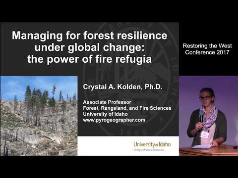 Managing for Forest Resilience under Global Change: the Power of Fire Refugia (RTW 2017)