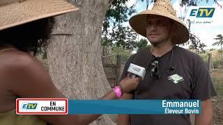 ETV en Commune et l'élevage bovin à Saint Martin