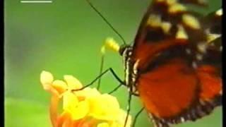 Kleiner bunter Schmetterling