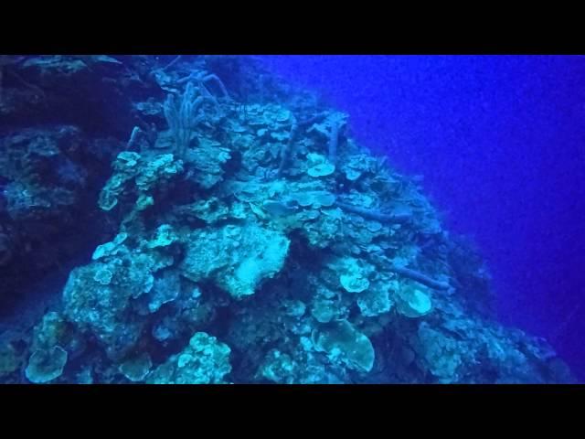 [1080P HD]キューバのPlaya Largaでのダイビング。 (豚の湾)
