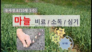 [농사정보] (10월1주)  마늘_밑거름&토양및…