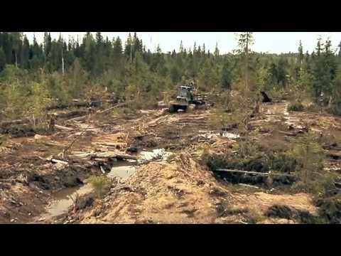 вельский лес закрытие предприятия