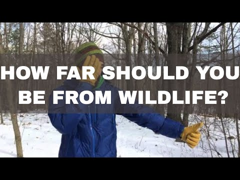 How To Know If You Are a Safe Distance From Wildlife