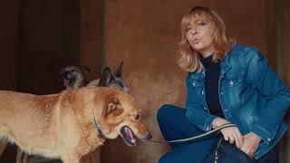 Как приучить взрослую собаку к поводку и выгулу?