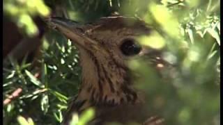 Na skraju lasu 2/2, audiodeskrypcja