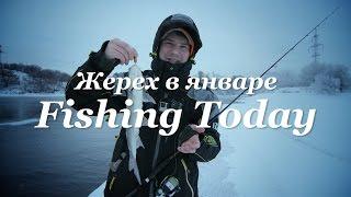 Ловля жереха на спиннинг в январе  - Fishing Today