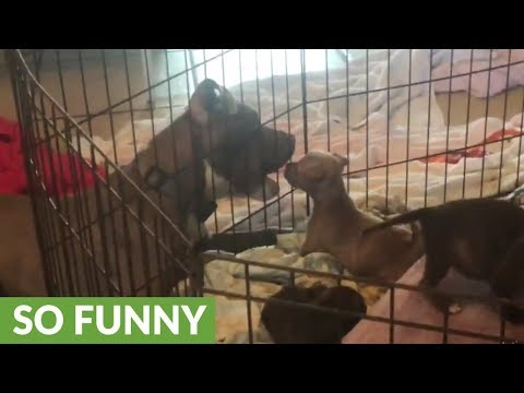 Loving dog play with puppies from outside cage