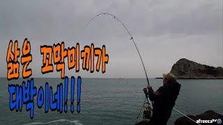 추자도 원투낚시 삶은 꼬막미끼가 대박이네!! 입질이 시원시원하네!! (fishing)