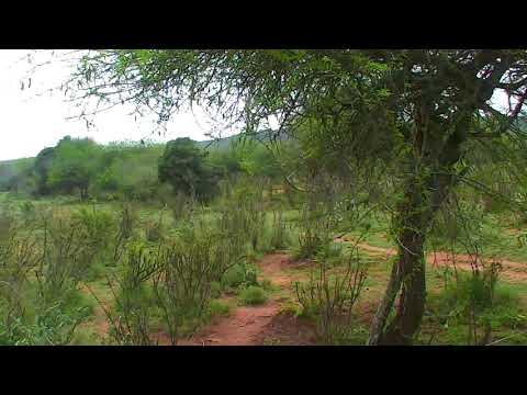 African River Wildlife Cam 03-14-2018 21:31:21 - 22:31:21