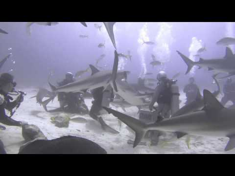 Bahamas Shark Feeding