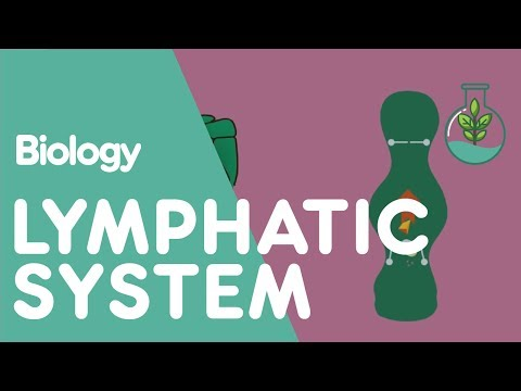 The Lymphatic System | Biology for All | The Fuse School