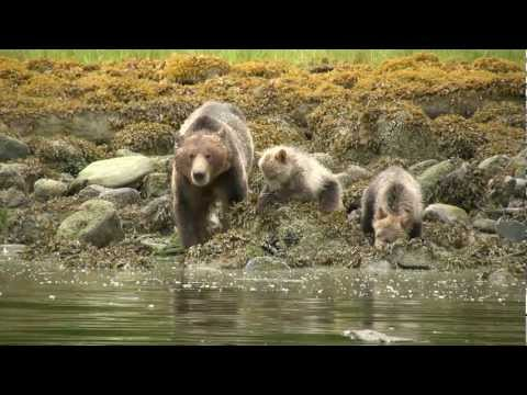 Telegraph Cove Grizzly Tour.mov