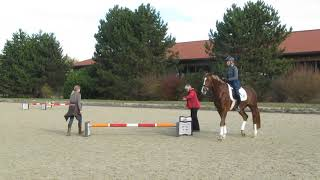 Ingrid Klimke, Firlefranz, offenes Training, Nov. 18