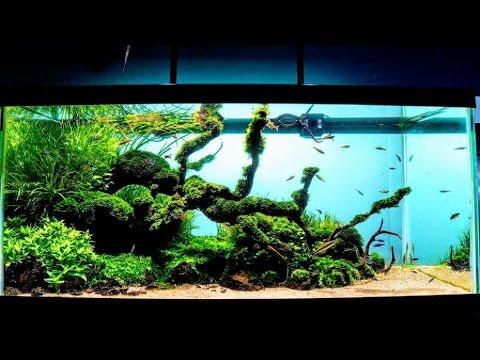 Review Aquaticlife Halo Deluxe Led Freshwater Aquarium