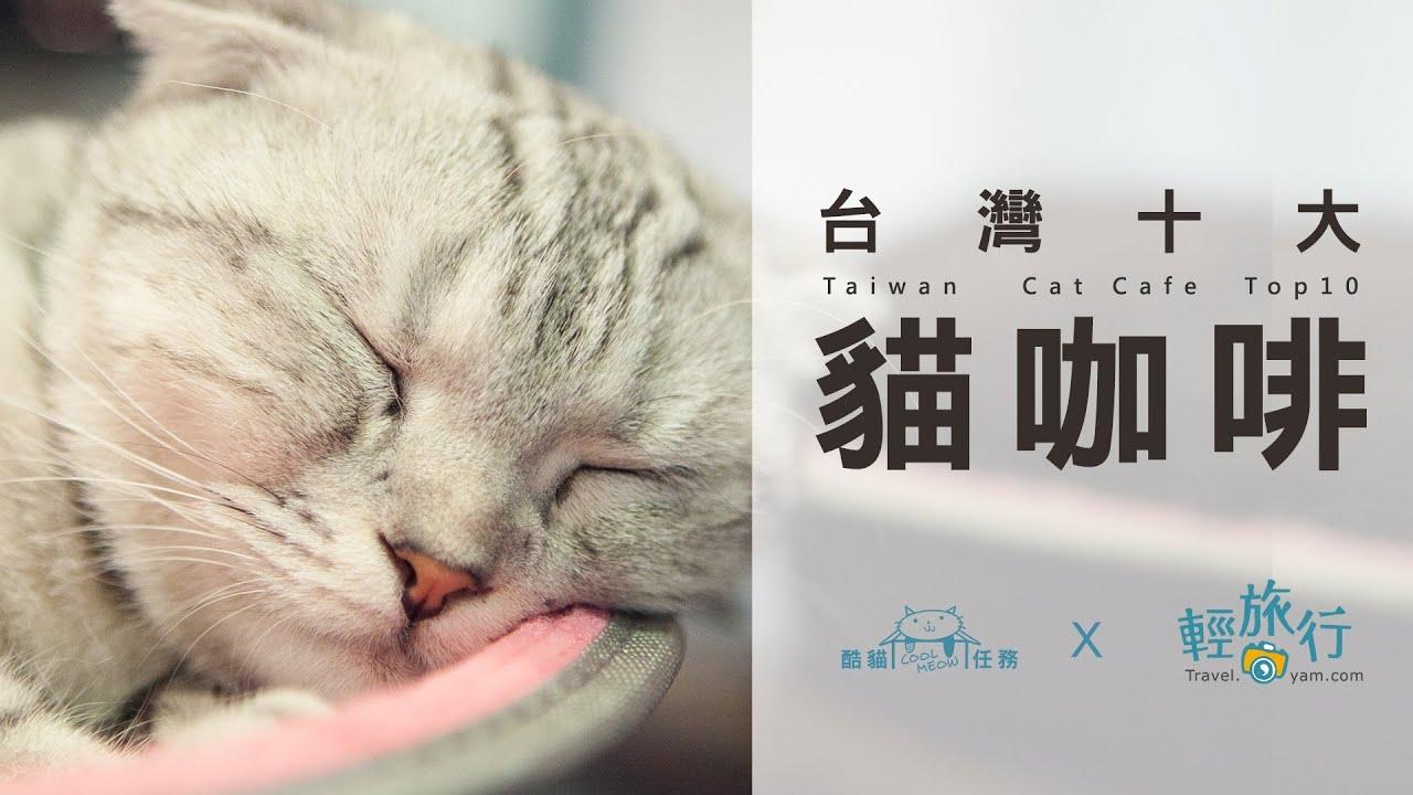 【臺灣十大貓咖啡】 EP01 - 小春日和寵物咖啡 - YouTube