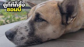 ความรักคนกับหมา พ่อกับแฟนจะเลือกใคร? ซอมบี้คิดถึงแฟนหนุ่มวัยละอ่อน #ดูกี่ทีก็ซึ้ง