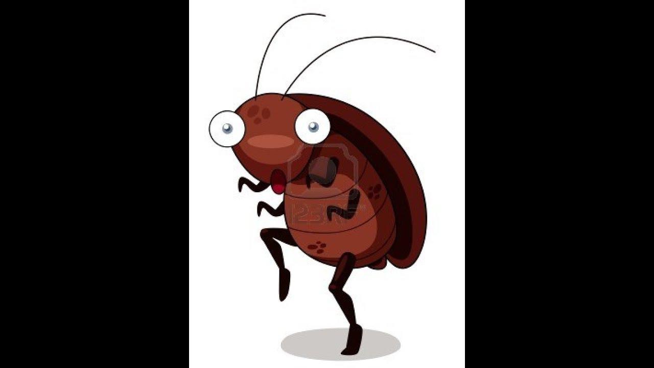 Картинки тараканы разбегаются, текстом