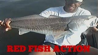 Риболовля на Червоному барабані (червоною рибою) в Тампа-Бей у Флориді (Кліруотер) влог | 2001