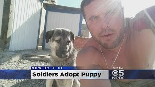 Soldiers Adopt Puppy In Iraq, Bring Him Home To California thumbnail
