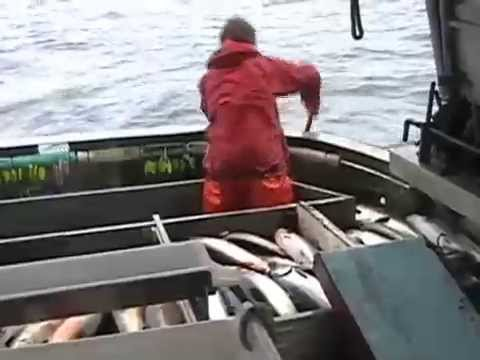 Alaskan Wild Salmon (The Fresh Fish Company)