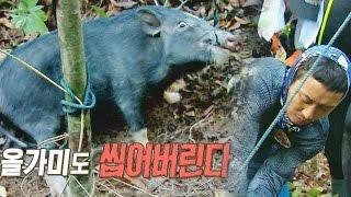 김병만·이태곤, 야생 멧돼지 포획 성공 @정글의 법칙 20150904