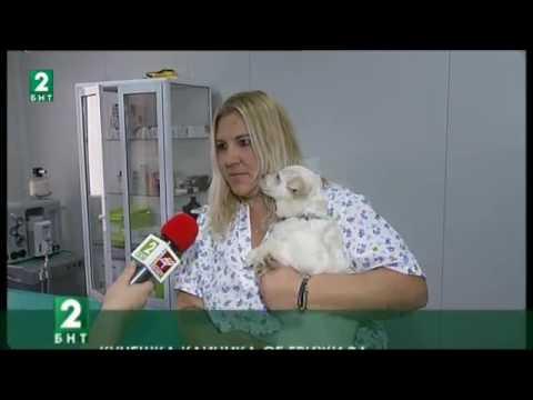 Lucky Hunt Foundation – BNT Bulgaria, Full material 09.12.16