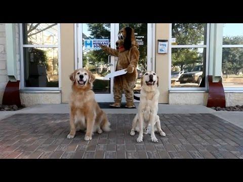 San Antonio Humane Society Tour