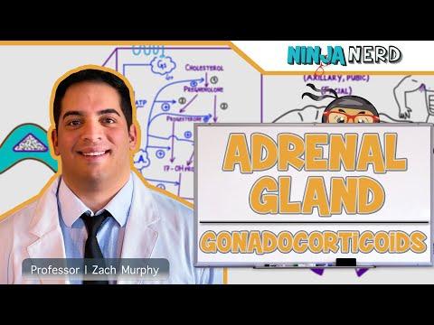 Endocrinology   Adrenal