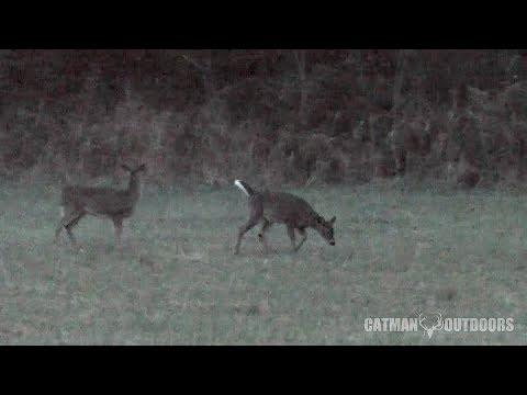 Christmas Eve Deer Hunt 2017... The 30-30 Speaks