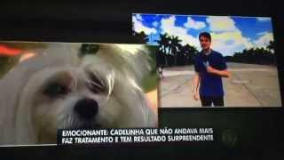 Dra Flávia Oliva -Vet Terapias  no Programa Balanço Geral TV Record Cindy Voltou andar!