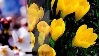 Дарите женщинам цветы!(Все мои проекты можно посмотреть на моём сайте http://nataliab2012.vspmax.com/index , а также оставить там мне сообщение...., 2014-06-18T03:41:40.000Z)