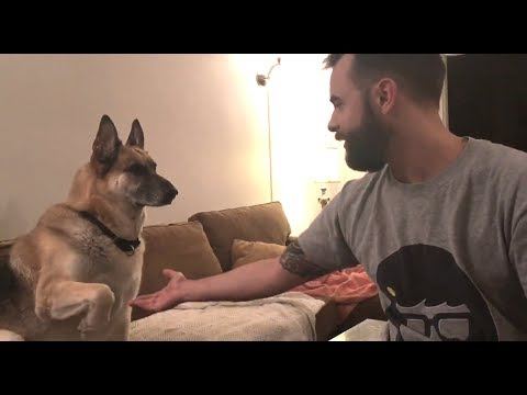 German Shepherd Refuses To Give Dad His Paw | The Dodo
