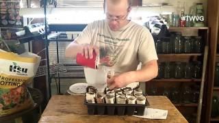 Starting Parsnips, Making Sweet Potato Slips & More - The Wisconsin Vegetable Gardener