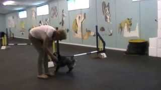Tuesday 5pm Agility Lesson With Josie At Sussex County Dog Training