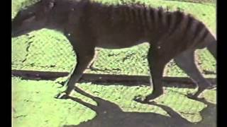 The Tasmanian Tiger (1964)
