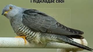 Цікаві факти про життя птахів