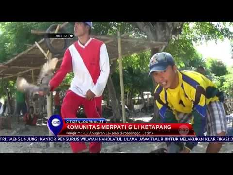 Komunitas Merpati Gili Ketapang NET.CJ -NET10
