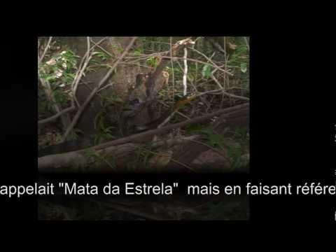 Baia da Formosa Brasil - Mata atlantica -  Mata Estrela