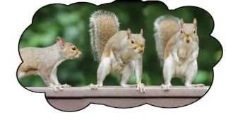 Keep Squirrels Away From Your Bird Feeder