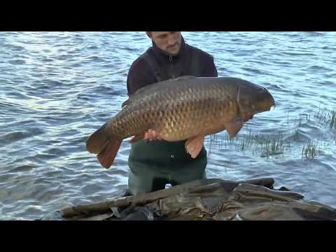Upper Tamar Carp Fishing Lake - 45lb 6oz Common Carp