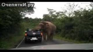 Слон на дорозі смішні приколы