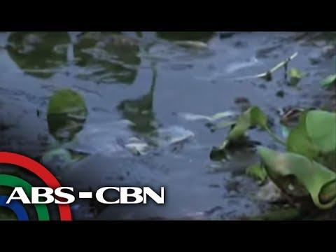 Bandila: Knife fish, basura, namemeste sa Laguna de Bay